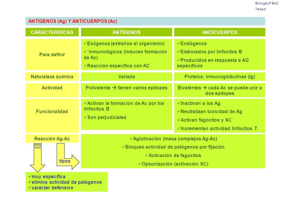 ANTÍGENOS (Ag) Y ANTICUERPOS (Ac)