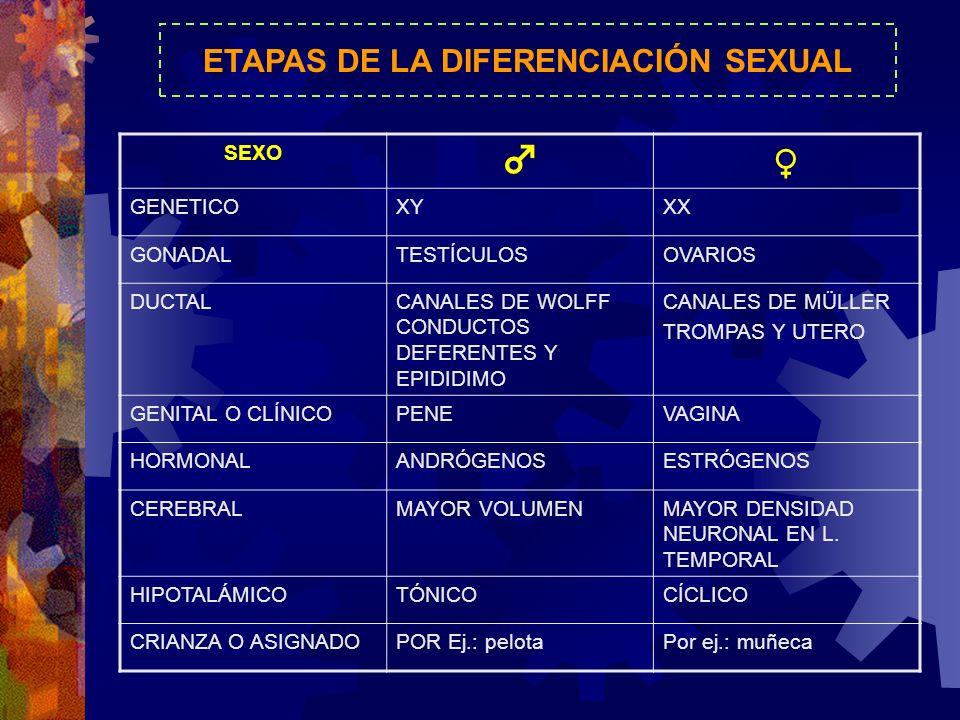 ETAPAS DE LA DIFERENCIACIÓN SEXUAL