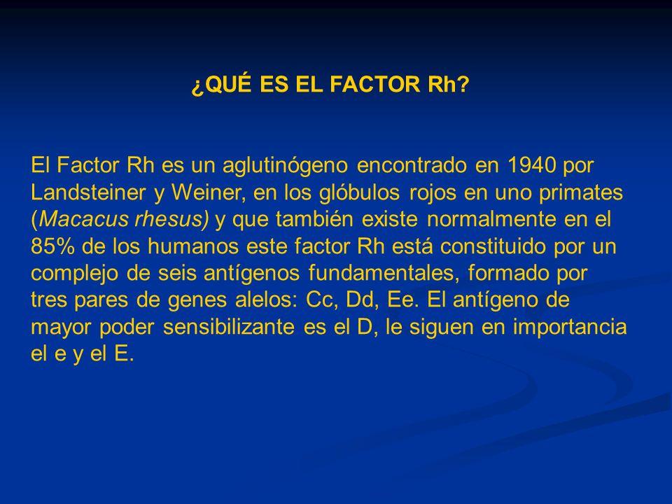 ¿QUÉ ES EL FACTOR Rh