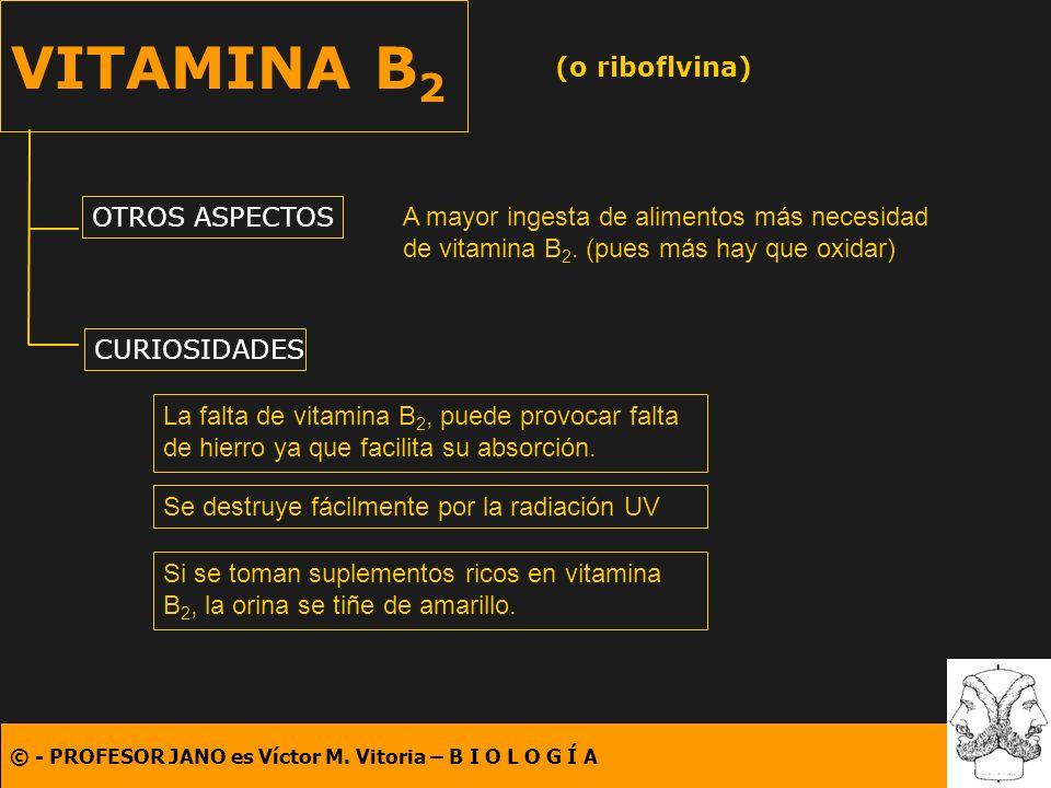 VITAMINA B2 (o riboflvina) OTROS ASPECTOS