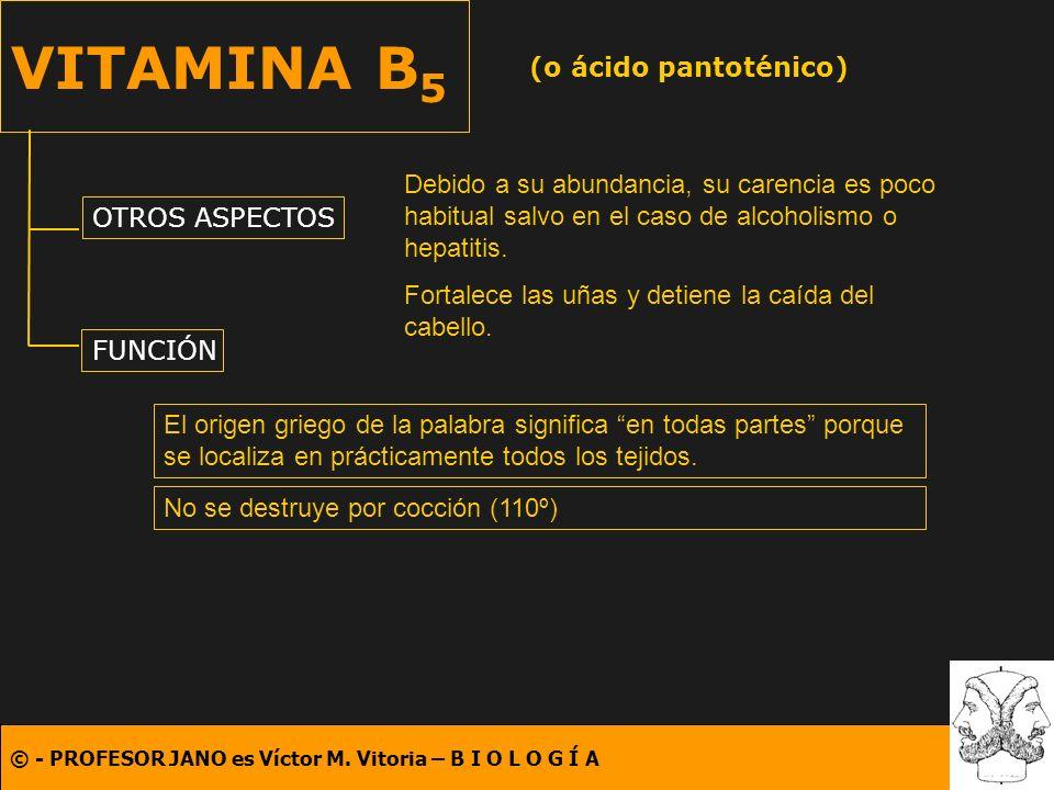 (o ácido pantoténico)