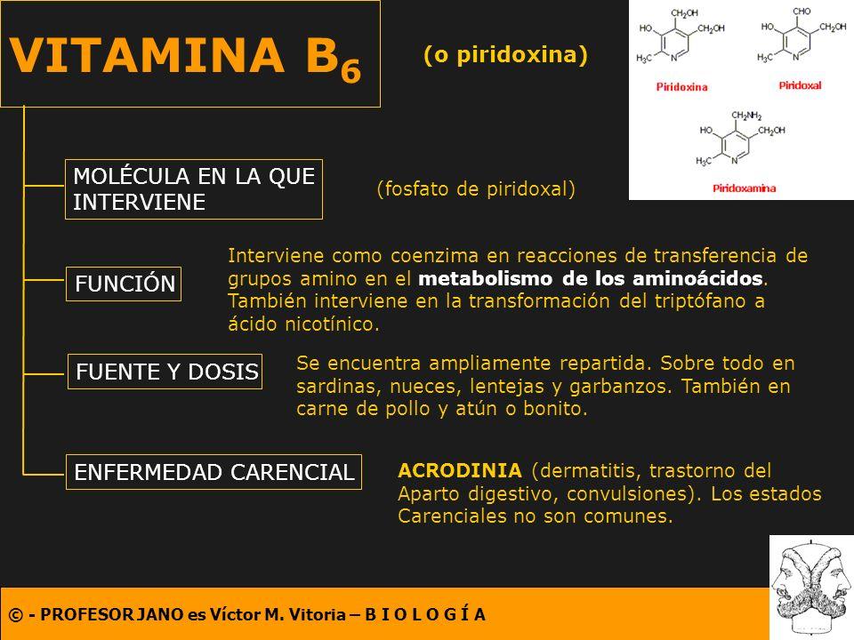 VITAMINA B6 (o piridoxina) MOLÉCULA EN LA QUE INTERVIENE FUNCIÓN