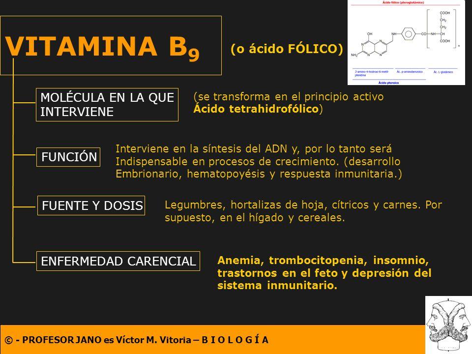 VITAMINA B9 (o ácido FÓLICO) MOLÉCULA EN LA QUE INTERVIENE FUNCIÓN