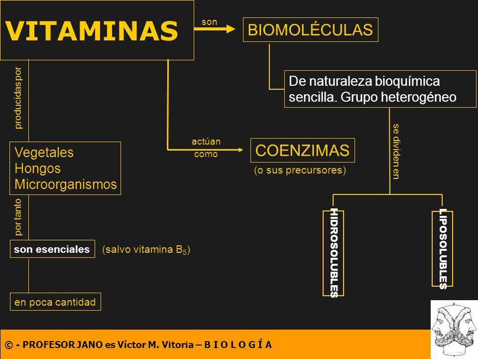 VITAMINAS BIOMOLÉCULAS COENZIMAS