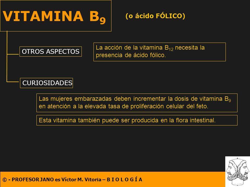 VITAMINA B9 (o ácido FÓLICO)