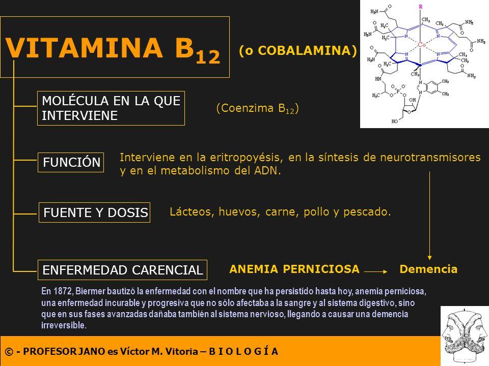 VITAMINA B12 (o COBALAMINA) MOLÉCULA EN LA QUE INTERVIENE FUNCIÓN