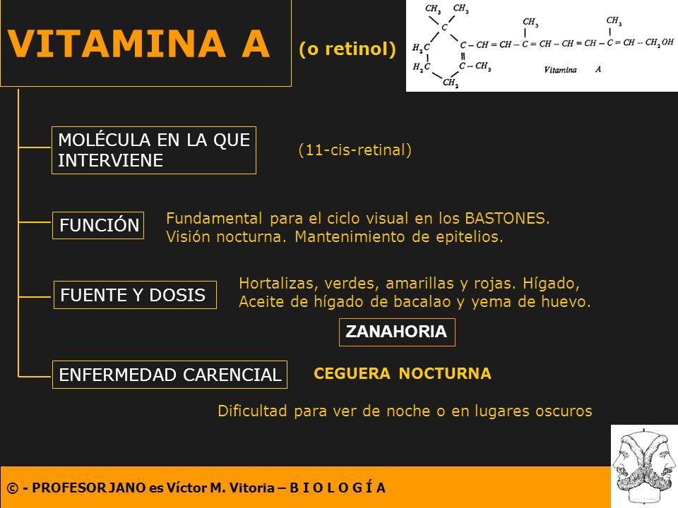 VITAMINA A (o retinol) MOLÉCULA EN LA QUE INTERVIENE FUNCIÓN