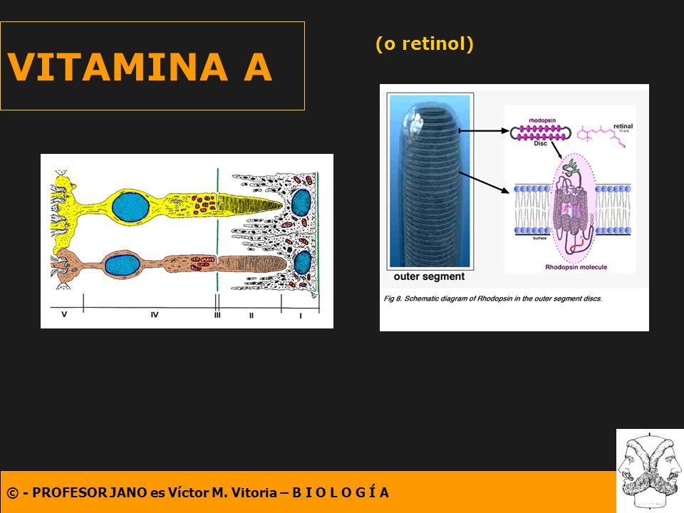 VITAMINA A (o retinol)