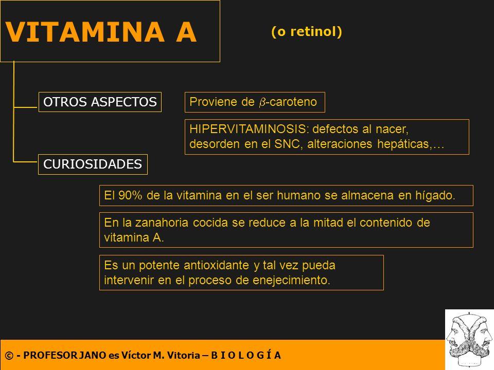 VITAMINA A (o retinol) OTROS ASPECTOS Proviene de b-caroteno