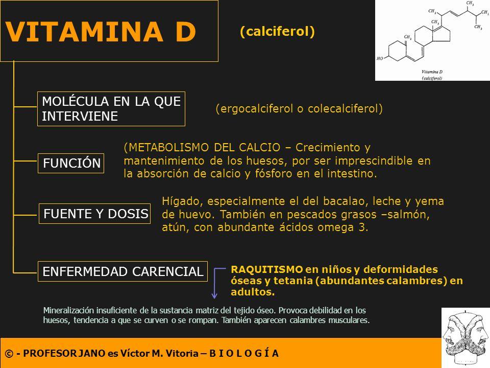 VITAMINA D (calciferol) MOLÉCULA EN LA QUE INTERVIENE FUNCIÓN