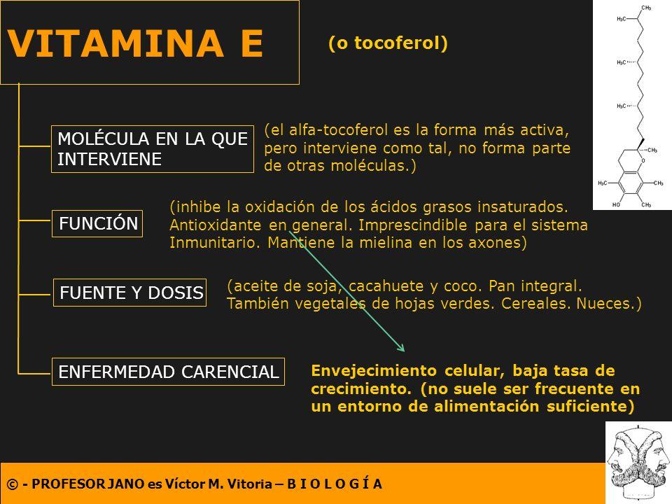 VITAMINA E (o tocoferol) MOLÉCULA EN LA QUE INTERVIENE FUNCIÓN