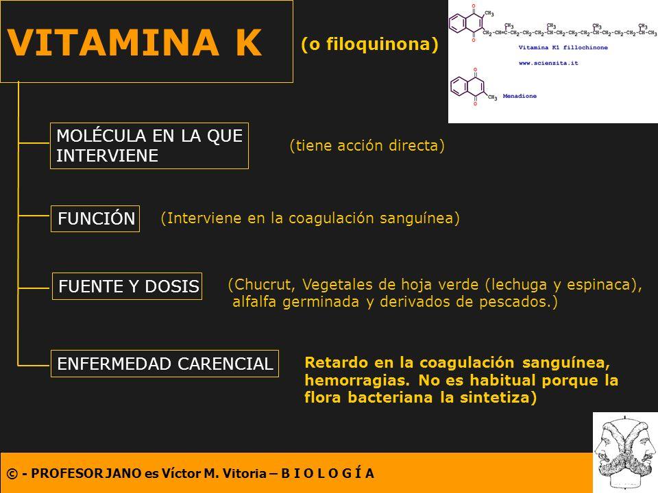 VITAMINA K (o filoquinona) MOLÉCULA EN LA QUE INTERVIENE FUNCIÓN