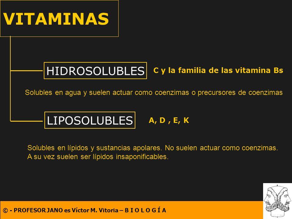 C y la familia de las vitamina Bs