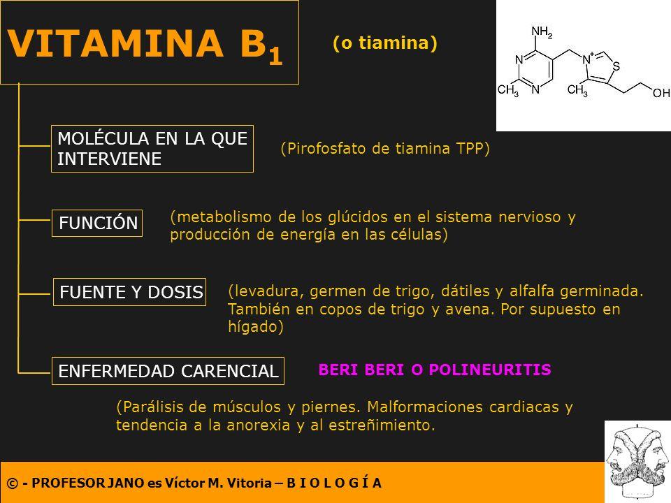 VITAMINA B1 (o tiamina) MOLÉCULA EN LA QUE INTERVIENE FUNCIÓN