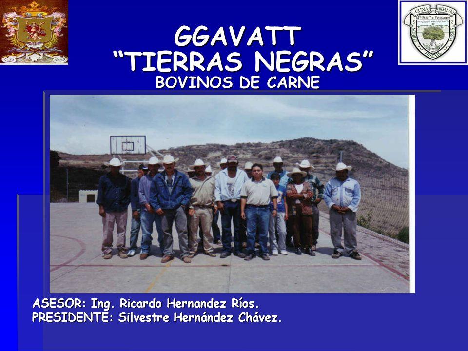 GGAVATT TIERRAS NEGRAS BOVINOS DE CARNE