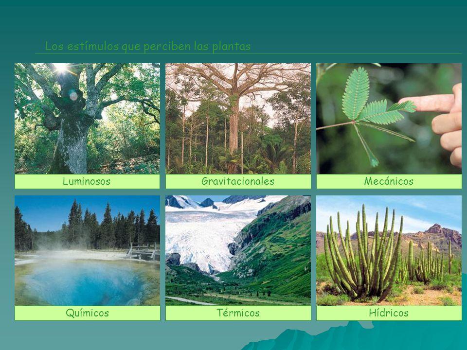 Los estímulos que perciben las plantas