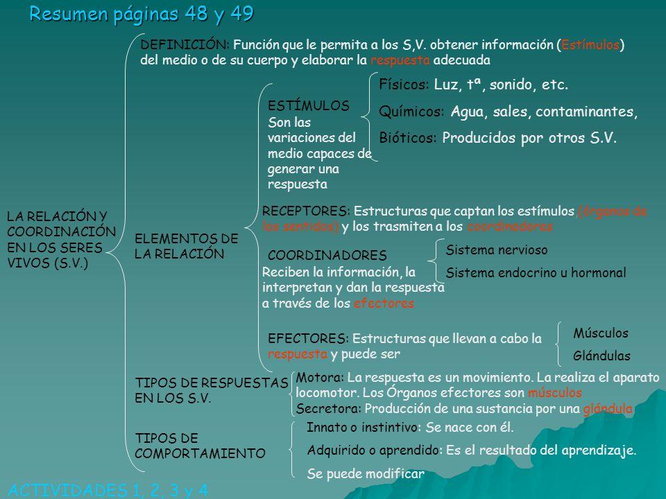 Resumen páginas 48 y 49 ACTIVIDADES 1, 2, 3 y 4