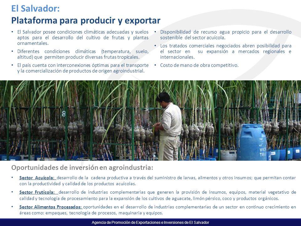 Plataforma para producir y exportar