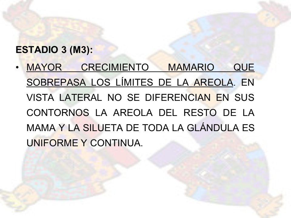 ESTADIO 3 (M3):