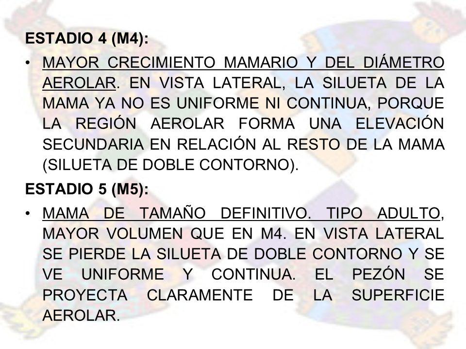 ESTADIO 4 (M4):