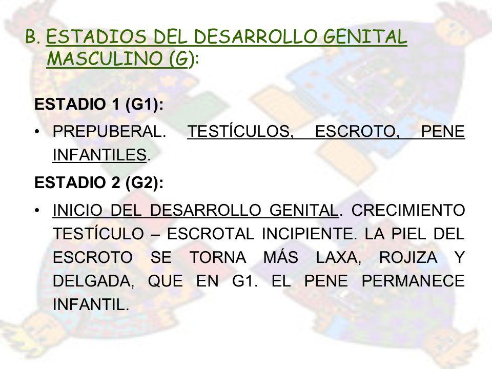 B. ESTADIOS DEL DESARROLLO GENITAL MASCULINO (G):
