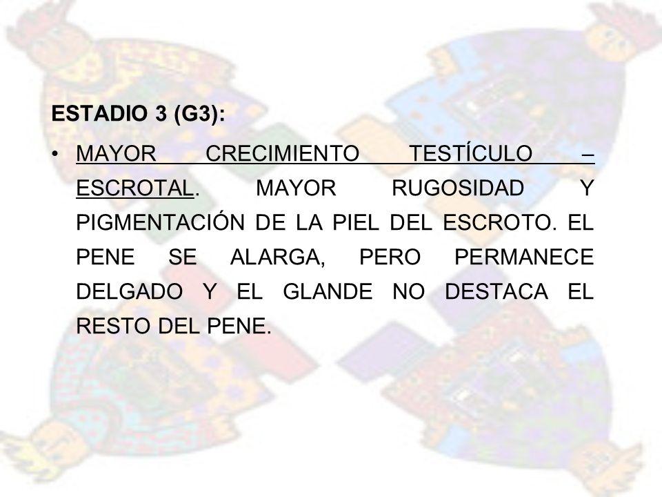 ESTADIO 3 (G3):