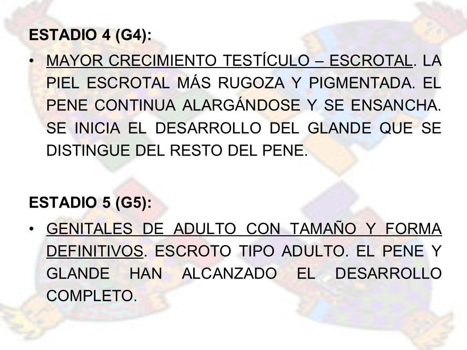 ESTADIO 4 (G4):