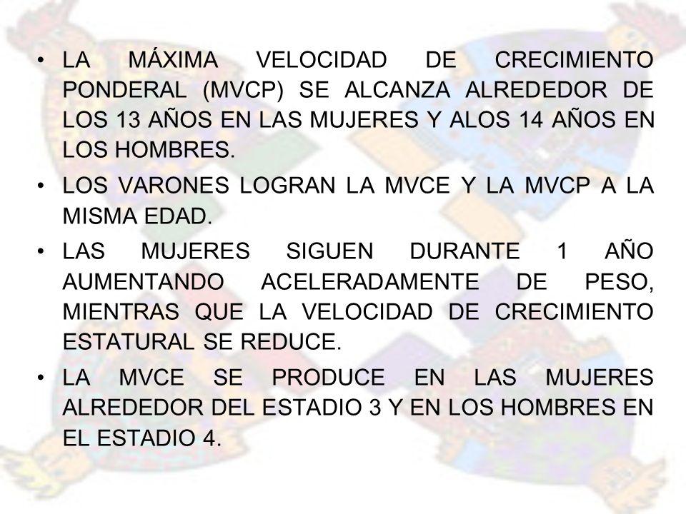 LA MÁXIMA VELOCIDAD DE CRECIMIENTO PONDERAL (MVCP) SE ALCANZA ALREDEDOR DE LOS 13 AÑOS EN LAS MUJERES Y ALOS 14 AÑOS EN LOS HOMBRES.