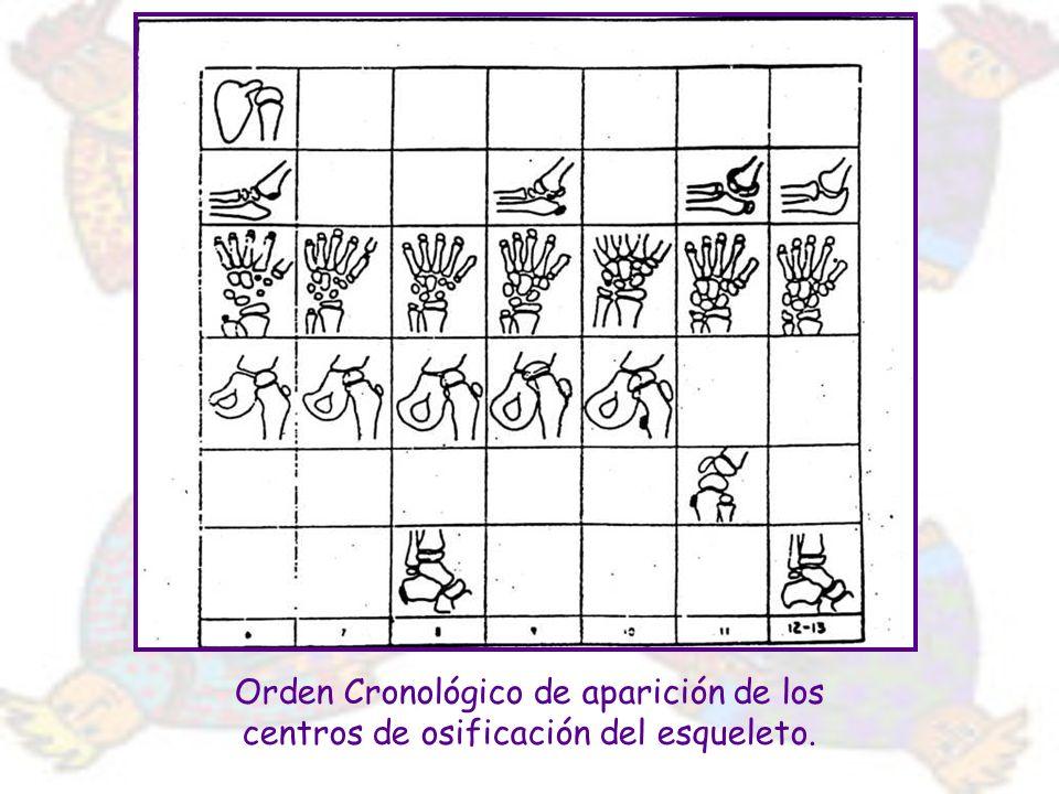 Orden Cronológico de aparición de los centros de osificación del esqueleto.