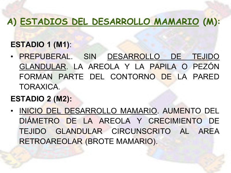 A) ESTADIOS DEL DESARROLLO MAMARIO (M):
