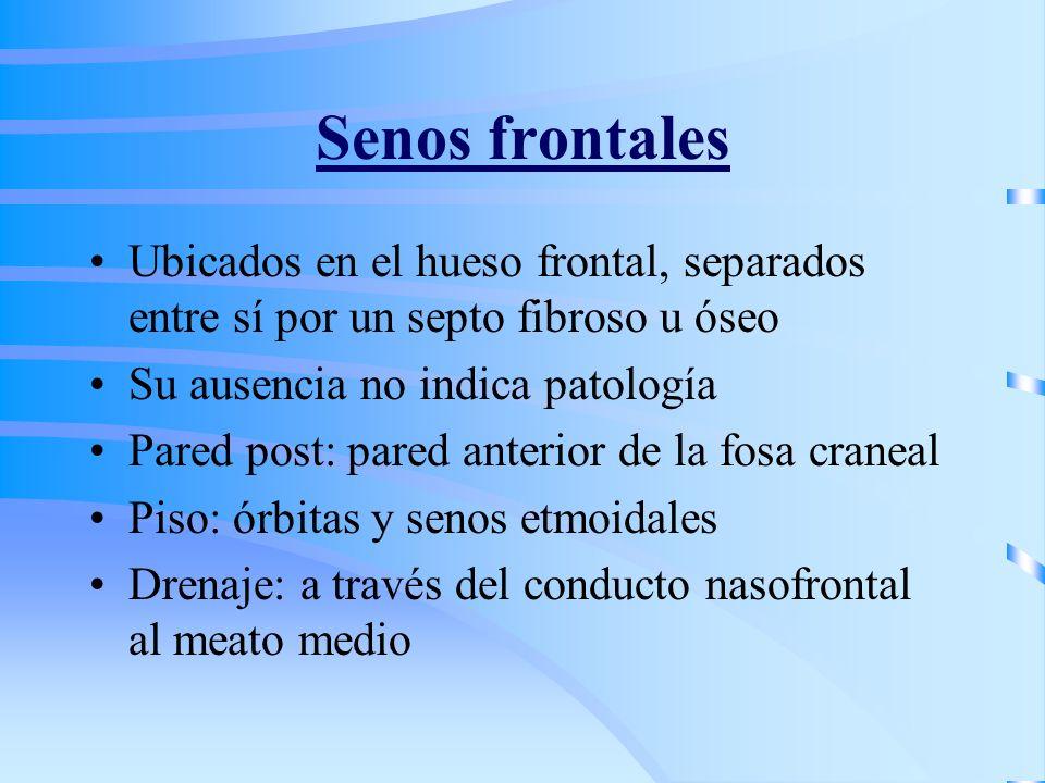 Senos frontales Ubicados en el hueso frontal, separados entre sí por un septo fibroso u óseo. Su ausencia no indica patología.