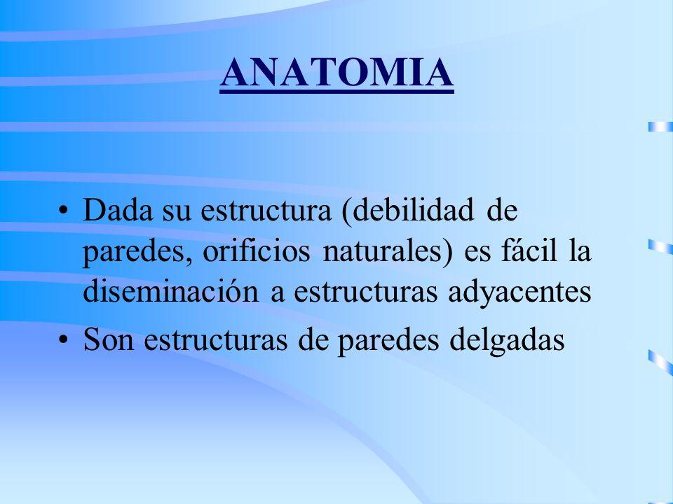 ANATOMIA Dada su estructura (debilidad de paredes, orificios naturales) es fácil la diseminación a estructuras adyacentes.