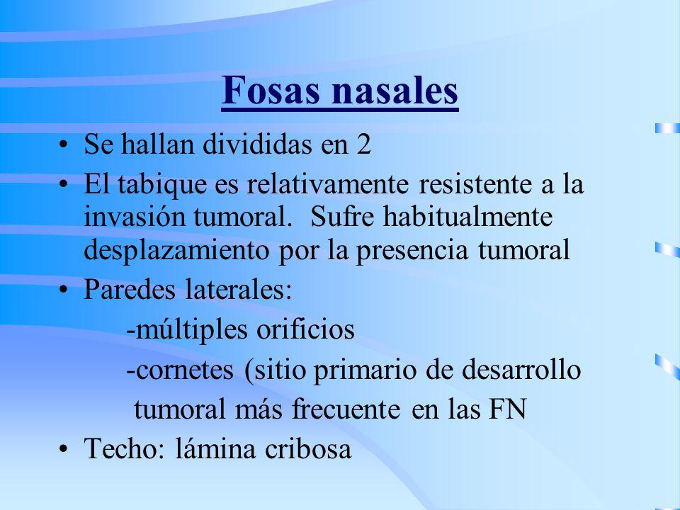 Fosas nasales Se hallan divididas en 2