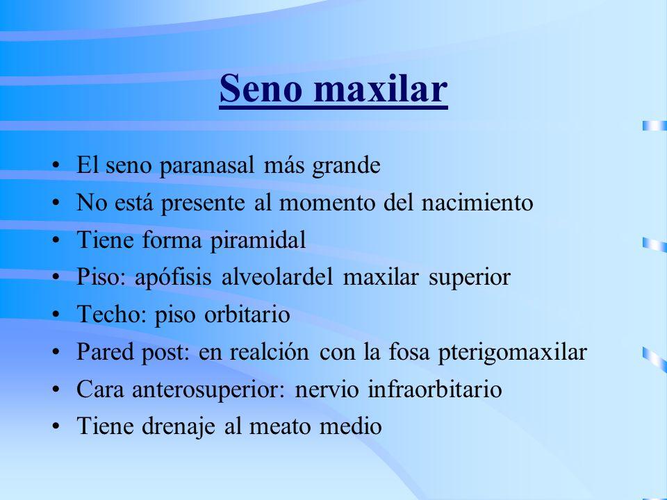 Seno maxilar El seno paranasal más grande