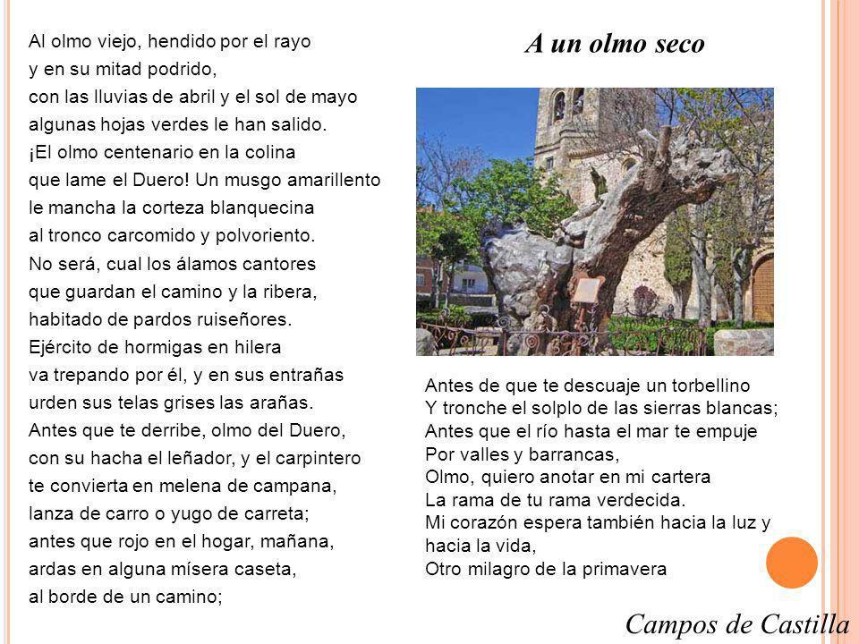 A un olmo seco Campos de Castilla Al olmo viejo, hendido por el rayo
