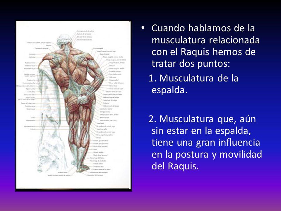 Cuando hablamos de la musculatura relacionada con el Raquis hemos de tratar dos puntos: