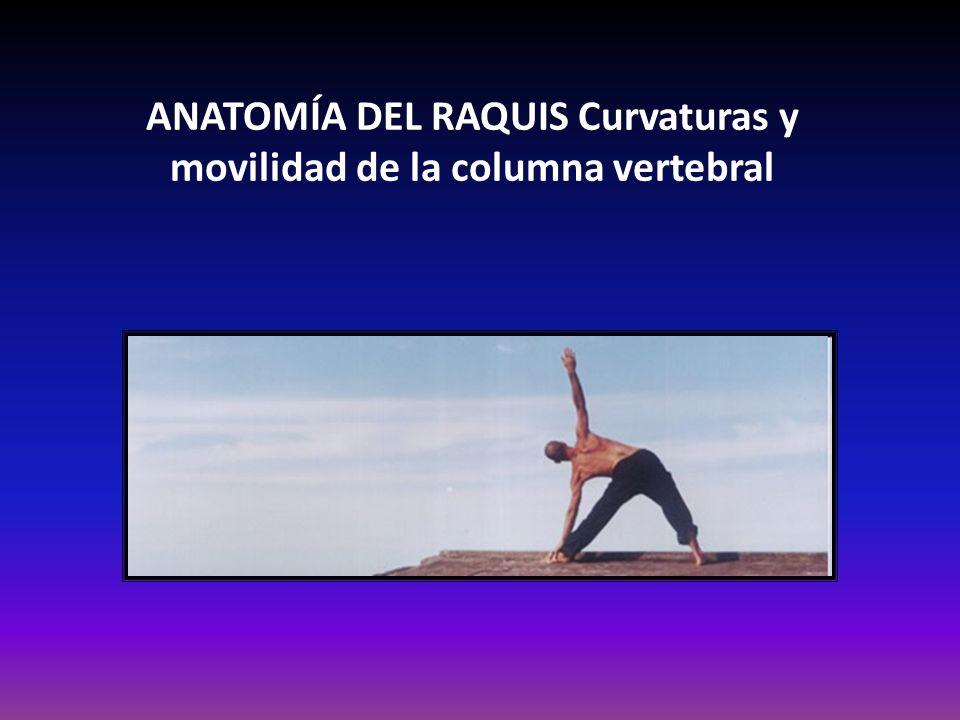 ANATOMÍA DEL RAQUIS Curvaturas y movilidad de la columna vertebral