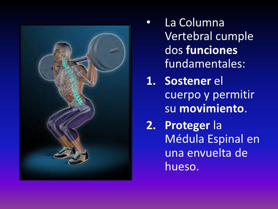 La Columna Vertebral cumple dos funciones fundamentales: