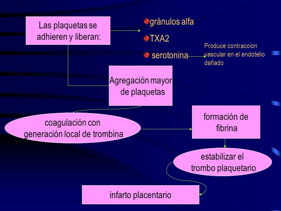 generación local de trombina
