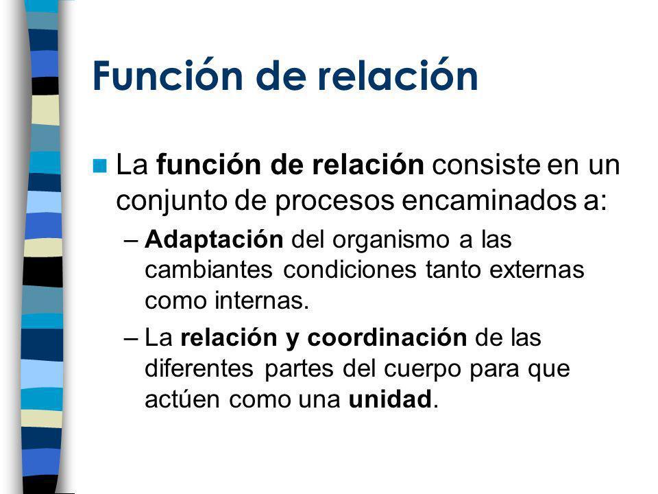 Función de relación La función de relación consiste en un conjunto de procesos encaminados a: