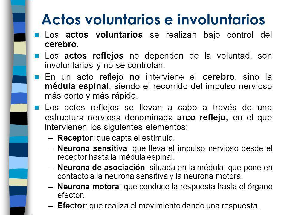 Actos voluntarios e involuntarios