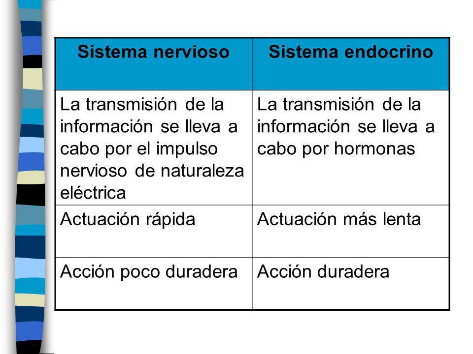 Sistema nervioso Sistema endocrino. La transmisión de la información se lleva a cabo por el impulso nervioso de naturaleza eléctrica.
