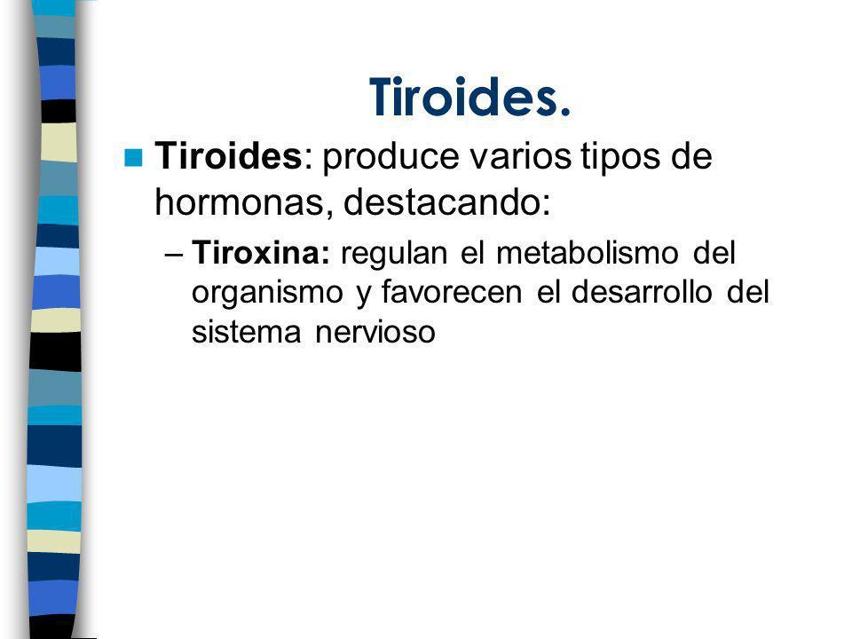 Tiroides. Tiroides: produce varios tipos de hormonas, destacando: