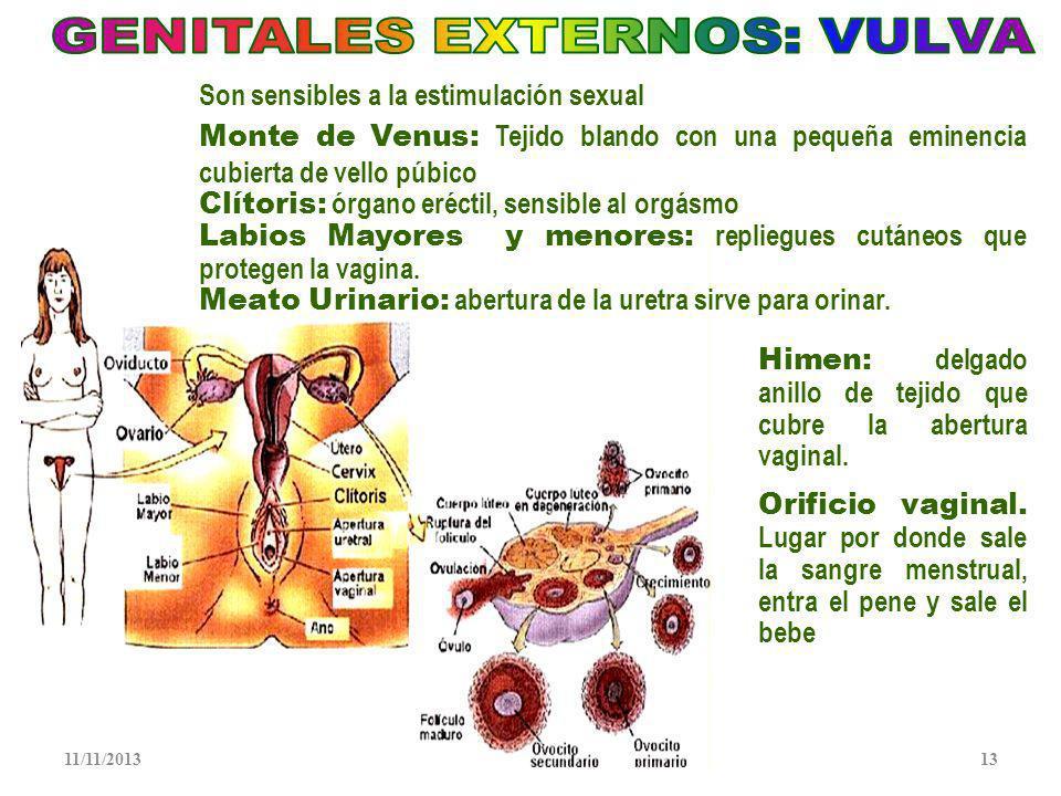 GENITALES EXTERNOS: VULVA