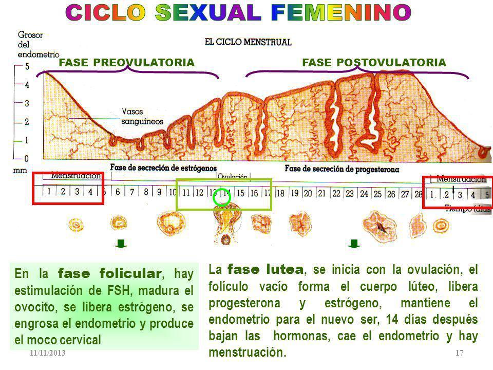 CICLO SEXUAL FEMENINO FASE PREOVULATORIA. FASE POSTOVULATORIA.