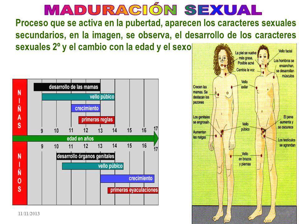 MADURACIÓN SEXUAL