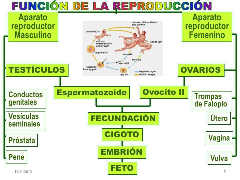 FUNCIÓN DE LA REPRODUCCIÓN