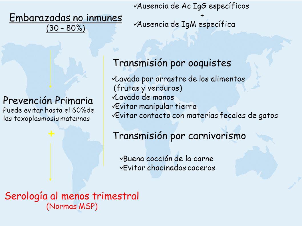 + Embarazadas no inmunes Transmisión por ooquistes Prevención Primaria