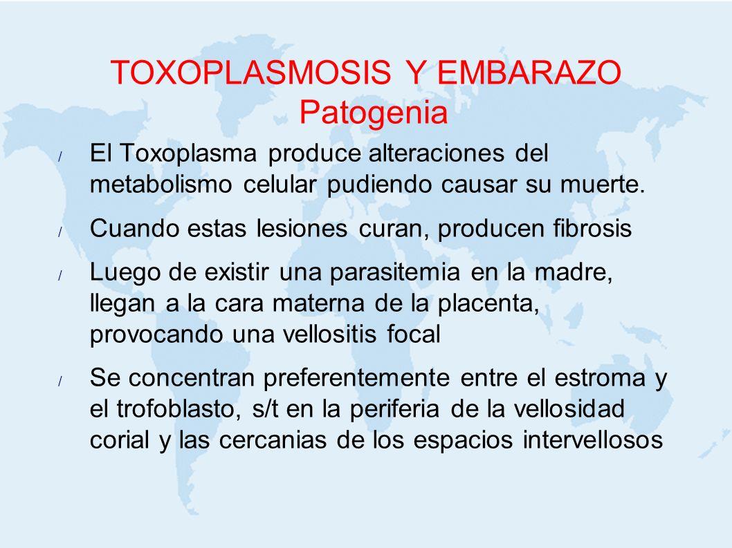 TOXOPLASMOSIS Y EMBARAZO Patogenia