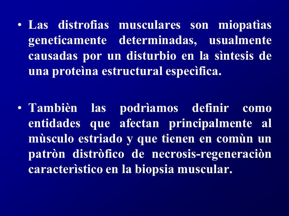 Las distrofias musculares son miopatìas geneticamente determinadas, usualmente causadas por un disturbio en la sìntesis de una proteìna estructural especìfica.